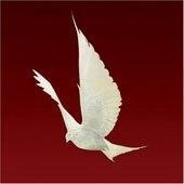 Floor - Dove
